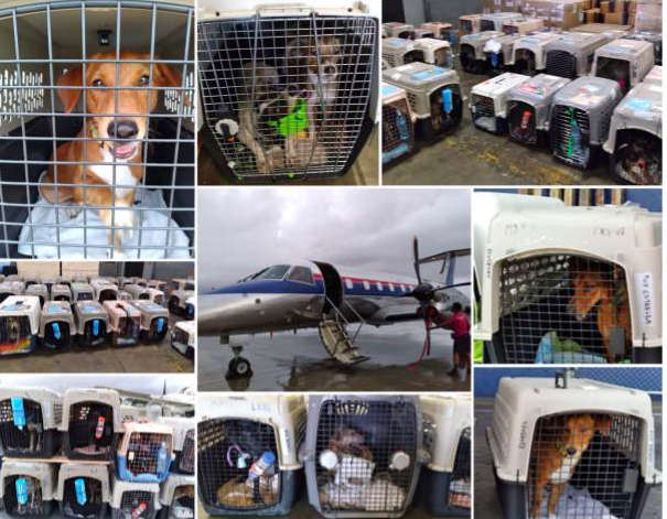 Intradco aids in dog rescue mission