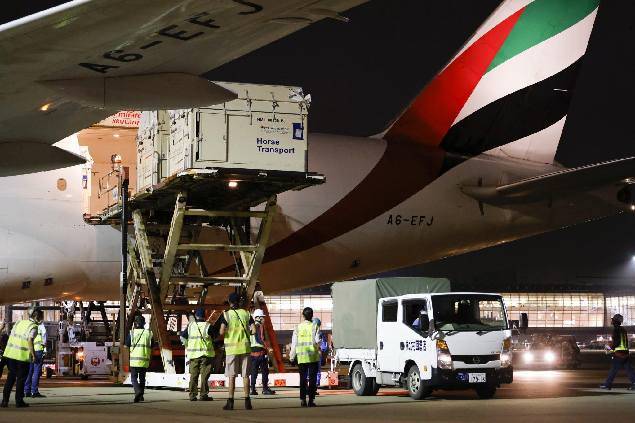 Emirates flies Olympic horses