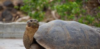 Aeroregional launches Galapagos route
