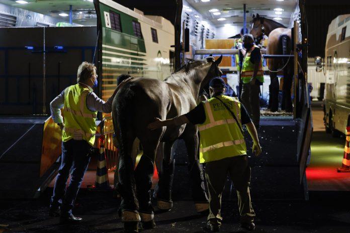 Equine champions fly home on Emirates SkyCargo